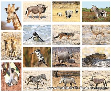 Postcard set African animals