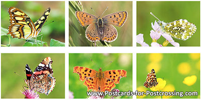 Butterfly postcard set 70