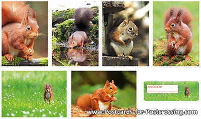 Postcard set squirrels