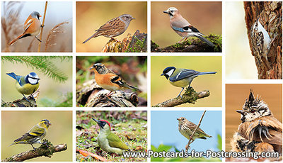 Bird postcardset