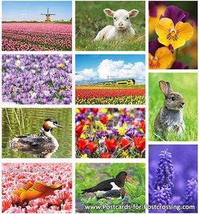 Spring postcardset