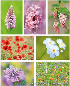 Postcard set flowers
