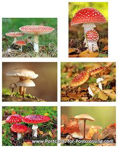 Mushroompostcard set