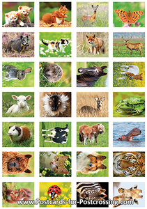 Animal sticker sheet