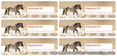 Postcrossing ID sticker Konikhorse