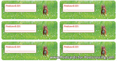 Postcrossing ID sticker - Red squirrel