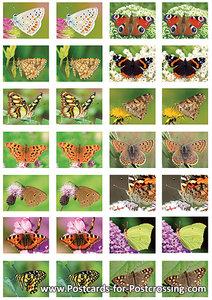 Butterflysticker sheet