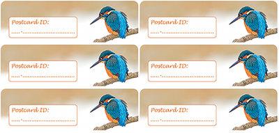 Postcard ID sticker Kingfischer