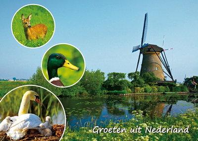 PostcardGroeten uit Nederland 003
