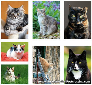 cat postcardset