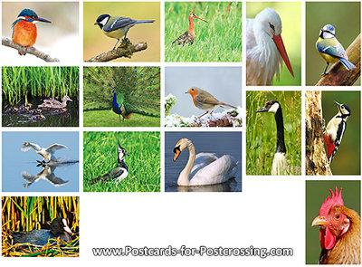 Bird postcard set