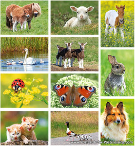 Animal postcard set