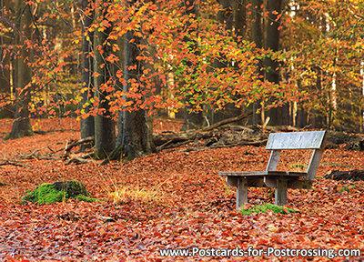 Autumn postcard - bench