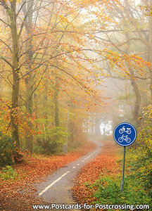 Bicycle path in the autumn postcard