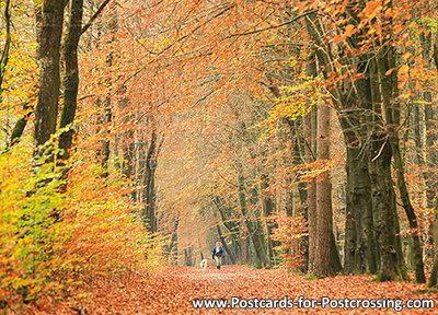 Autumn lane postcard