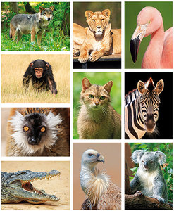 Zoo postcards - set with 10 postcards
