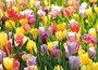 Flower-postcards