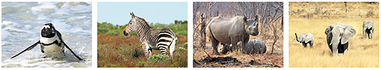 Postcards animals in Africa, African animals, wild animals