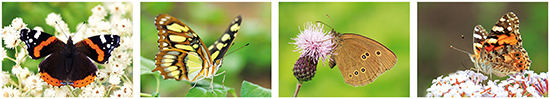 butterfly postcards