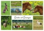 Ansichtkaart groeten uit Groningen, Postcard greetings from Groningen, Postkarte grüße aus Groningen