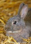 Ansichtkaart konijn,  rabbit postcard, Postkarte Kaninchen