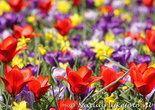 bloemen kaarten, ansichtkaart bloemenperk  - postcard various flowers - blumen Postkarten