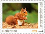postzegels voor Postcrossing eekhoorn
