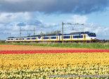 trein ansichtkaart Sprinter trein met tulpenveld, train postcard Sprinter, Zug Postkarte Sprinter