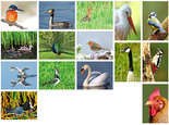 Bird-postcardset--(24)