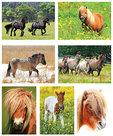 Kaartenset paarden en pony's - Postcard horses and ponies -  Postkarten Set Pferde und Ponys