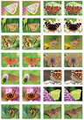 Butterfly-sticker-sheet-for-Postcrossing-(SV010)