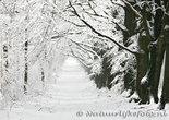 ansichtkaart winter laantje, winter postcardlandscape, winter Postkarte Winterlandschaft