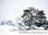 ansichtkaart winter op de veluwe, winter postcard Veluwe, Winter Postkarte Veluwe