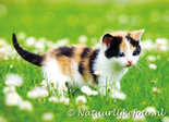 Ansichtkaart Poes met bloemen, postcard cat with flowers, Postkarte Katze mit Blumen