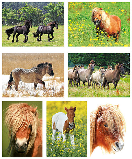 postcard set horses and ponies