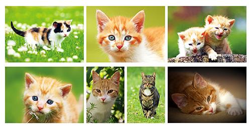 cats postcard set