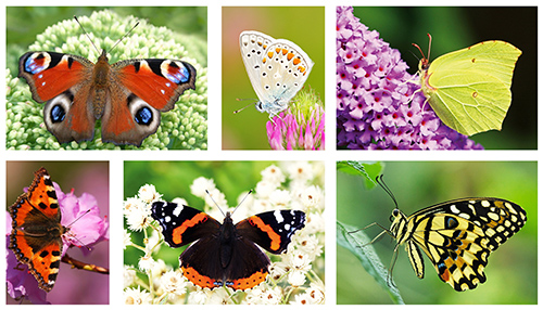 postcard set butterflies
