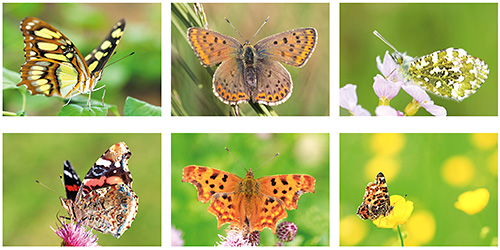 Butterfly postcard set