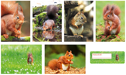 Squirrel postcardset