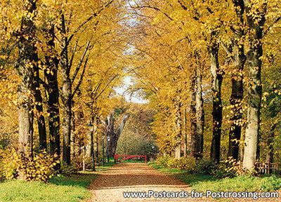 Herfstkaarten, ansichtkaartherfst laan, postcard Autumn lane, postkarte Herbst lane