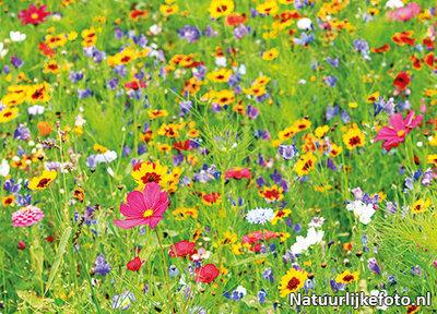 bloemen kaarten, ansichtkaart wilde bloemen - postcard wild flowers - Postkarte Wilde Blumen