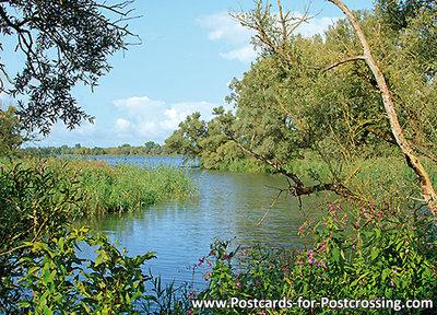 ansichtkaart Biesbosch, Postcard Biesbosch, Postkarte Biesbosch