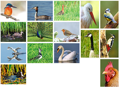 Bird postcardset  (24)