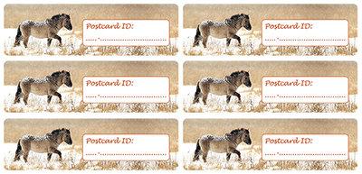 Postcard ID stickers - 6x Konik horse