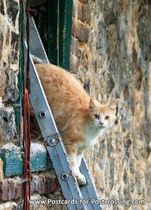 Ansichtkaart kat op ladder, postcard Cat on ladder, Postkarte Katze auf Leiter