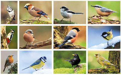 postcard set forest birds