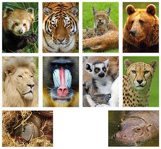Kaartenset dierentuin dieren