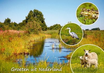 Postcard Groeten uit Nederland 005