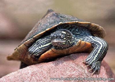 ansichtkaart schildpad kaart, postcard animals False map turtle - postkarte Tiere Falsche Landkarten-H&#x00f
