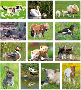 Postcardset Animals